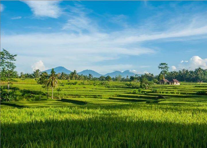 HBR-Bali_May-2016 (11)