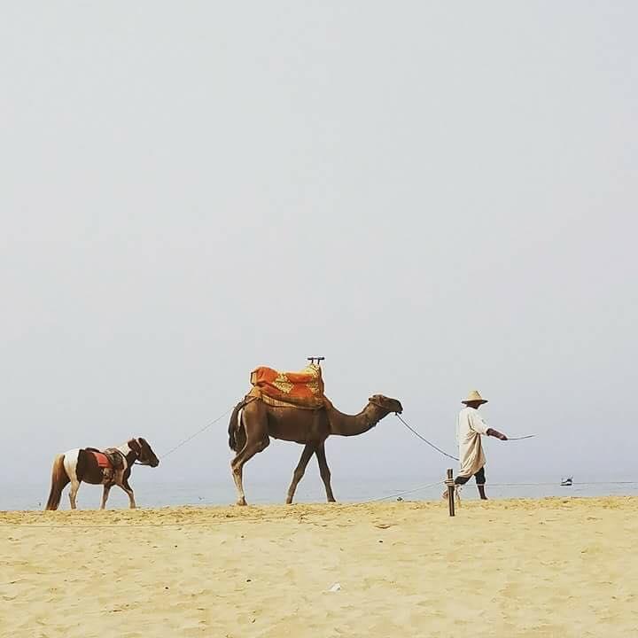 HBR - Morocco - Sept 17 (9)