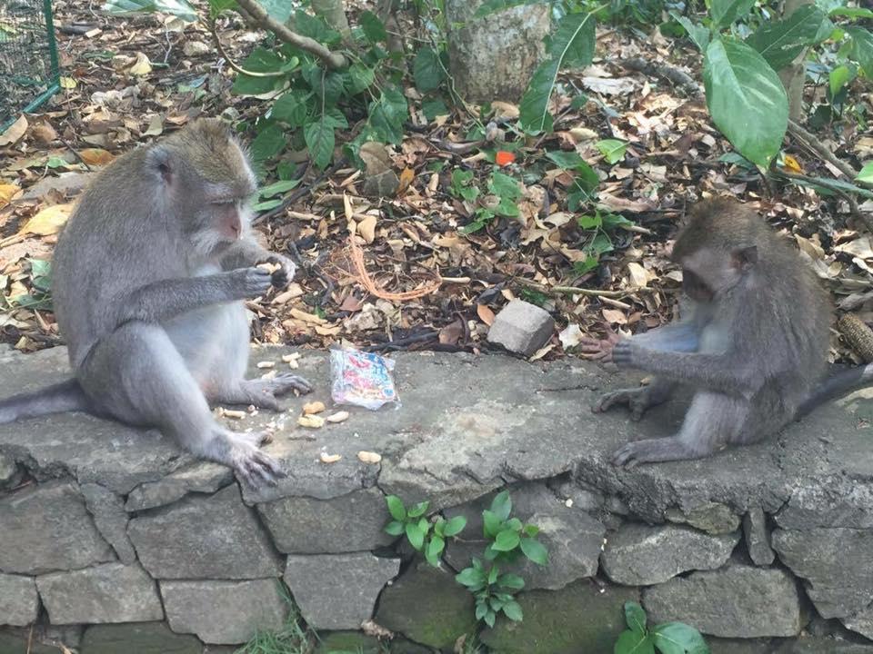 HBR-Bali_May-2016 (23)