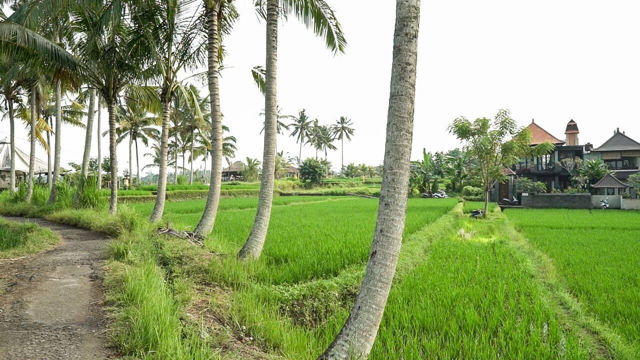HBR-Bali_May-2016 (53)