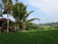 HBR-Bali_May-2016 (18)