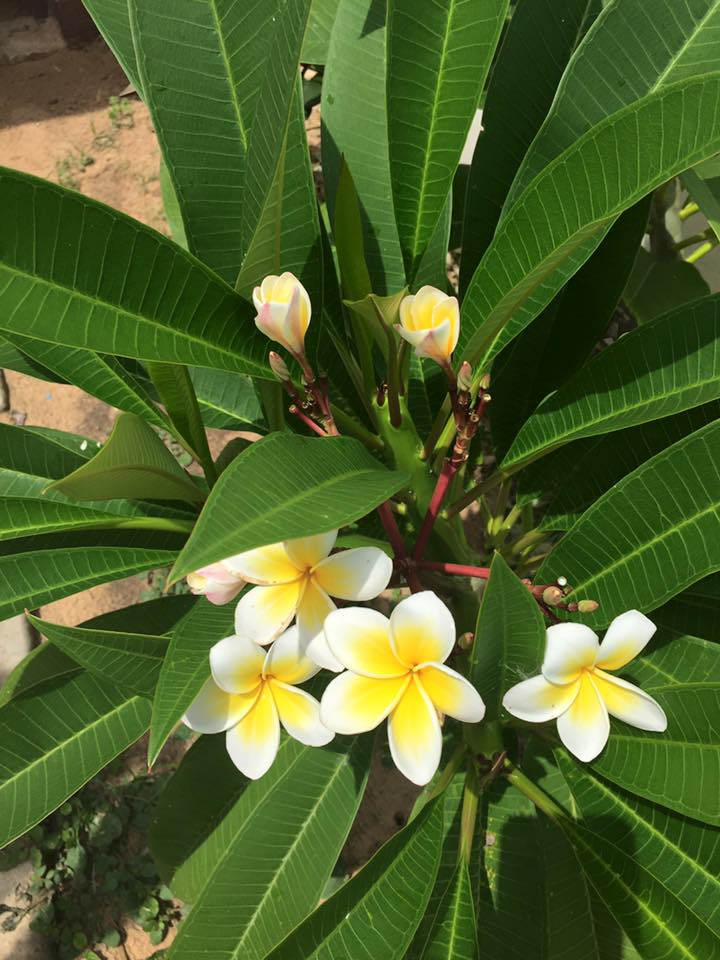 HBR-Sri-Lanka_August-16 (31)