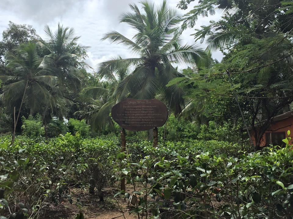 HBR-Sri-Lanka_August-16 (64)