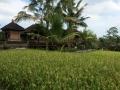 HBR_Bali_May15 (12).jpg