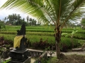 HBR_Bali_May15 (14).jpg