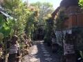 HBR_Bali_May15 (21).jpg
