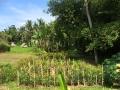 HBR_Bali_May15 (8).jpg
