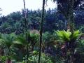 HBR Bali NYE 2017 (21)