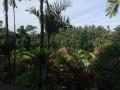 HBR Bali NYE 2017 (4)