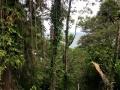 Bocas-Jan-16 (17)